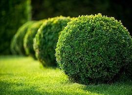 Garden Staging